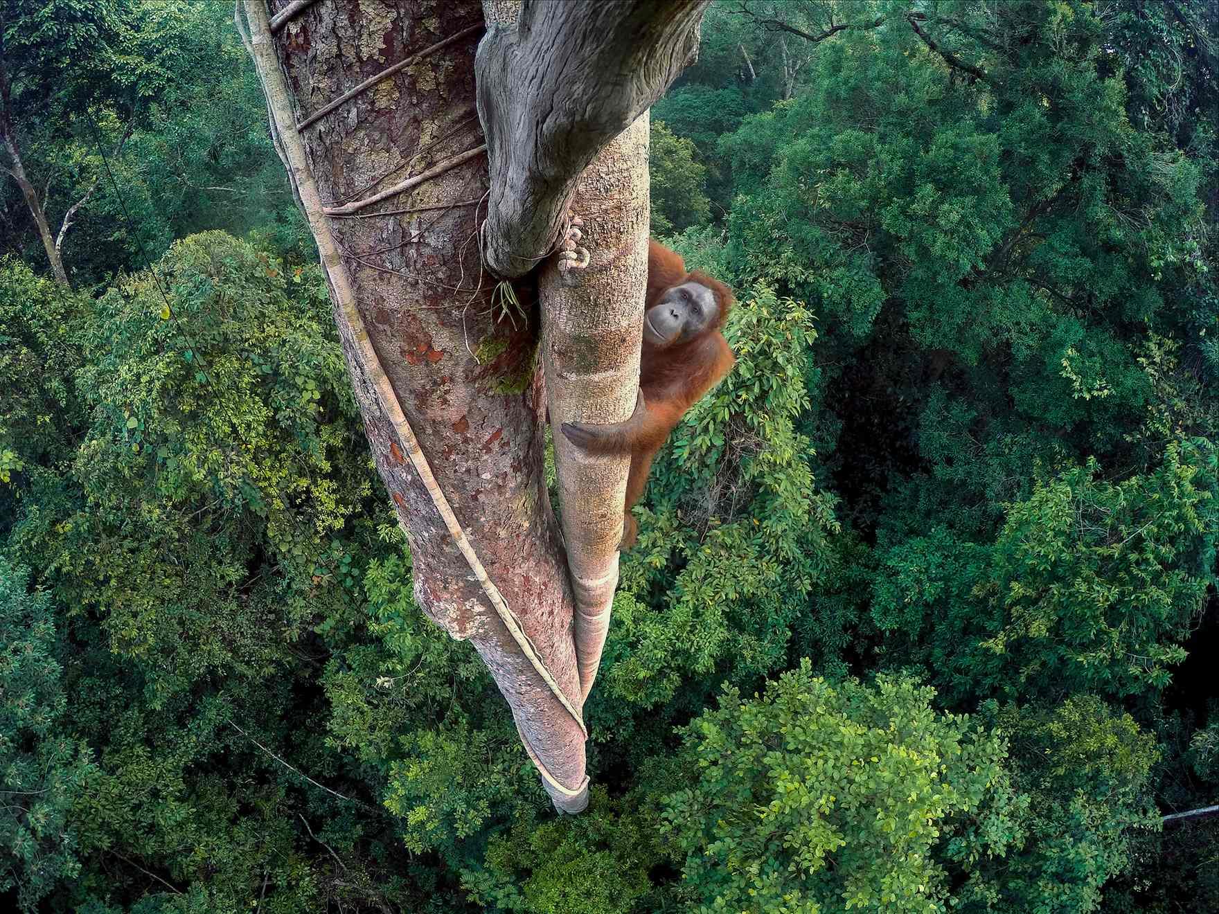 Tree borers amp bark beetles arborx tree health care - Orangutan In Borneo