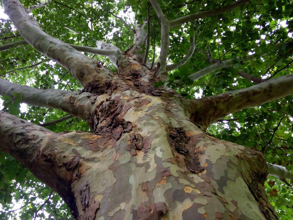 Tree borers amp bark beetles arborx tree health care - Tree Borers Amp Bark Beetles Arborx Tree Health Care 53