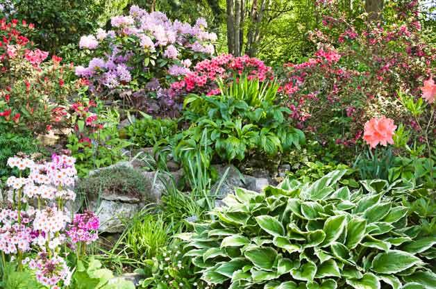 garden2jpg