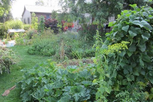 Légumes-Nain Haricot tendergreen 120 graines-légumes